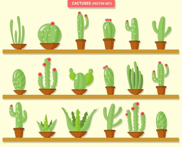 Domowe rośliny tropikalne, kaktus w doniczkach, kwiaty, przyroda.