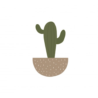 Domowy kaktus