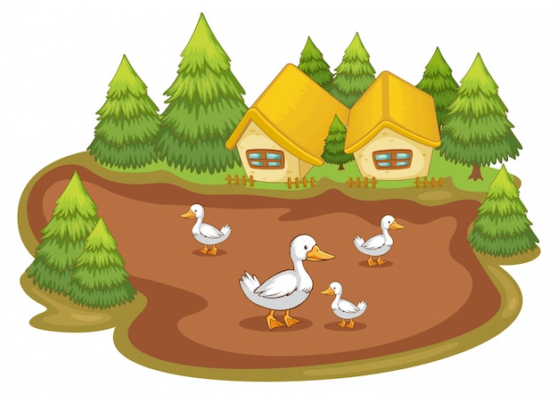 Domy z kaczkami na białym tle