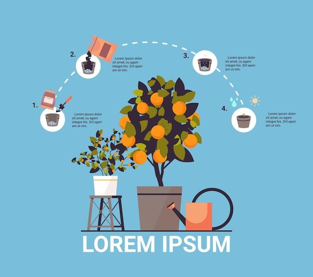 Doniczkowa roślina pomarańczowa rośnie drzewo owocowe w doniczce praca w ogrodzie rolnictwo infografika koncepcja procesu sadzenia