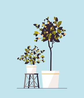 Doniczkowe rośliny cytrynowe rosnące drzewa owocowe w doniczkach ilustracji wektorowych