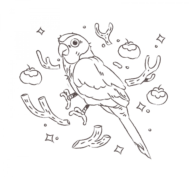 Doodle papugi