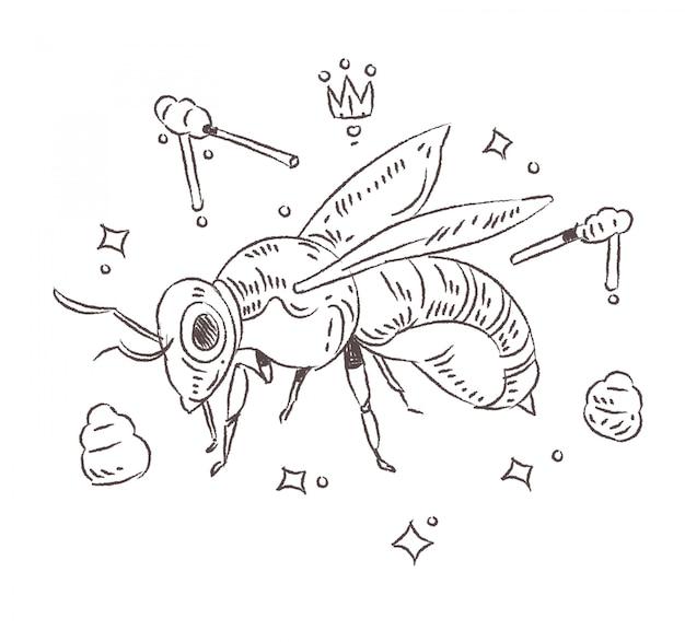 Doodle pszczoły miodnej