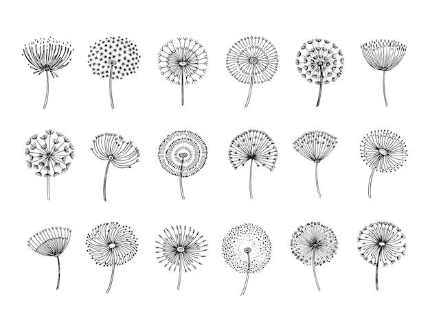 Doodle ręcznie rysowane mlecze monstera delikatne nasiona roślin