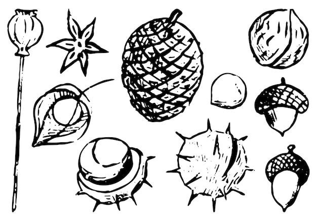 Doodles zestaw jesiennych elementów przyrody. orzechy, kasztany, żołędzie, mak, anyż, szyszka. pęcherzyca. ręcznie rysowane ilustracje wektorowe kolekcji. czarny obiekt na białym tle do projektowania, wystroju.