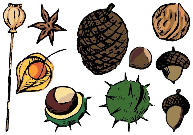Doodles zestaw jesiennych elementów przyrody. orzechy, kasztany, żołędzie, mak, anyż, szyszka, pęcherzyca. ręcznie rysowane ilustracje wektorowe kolekcji. kolorowy obiekt na białym tle do projektowania, wystroju.