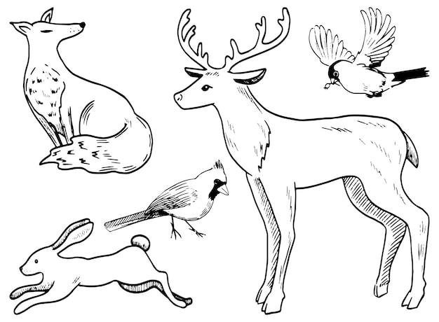 Doodles zestaw zwierząt zimowych. jeleń, zając, lis, gil, kardynał północny. ręcznie rysowane ilustracje wektorowe kolekcji. zarys elementów na białym tle do projektowania, wystroju, wydruków, naklejek, kart.