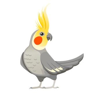 Dorosły papuga normalny szary nimfy (nymphicus hollandicus, corella) ptak kreskówka projekt płaski wektor ilustracja na białym tle.