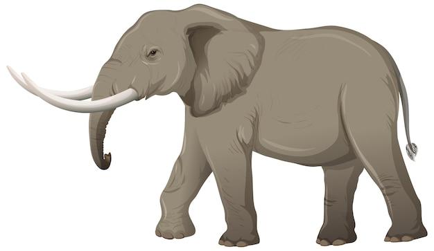 Dorosły słoń z kością słoniową w stylu cartoon