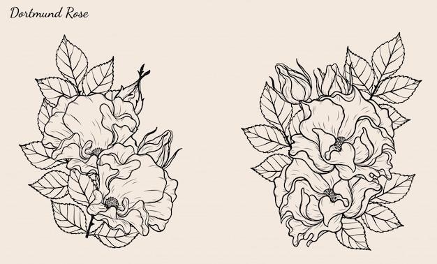 Dortmund rose wektor zestaw ręcznie rysunek.