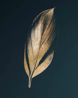 Dracaena recina, soczysty tropikalny liść vintage