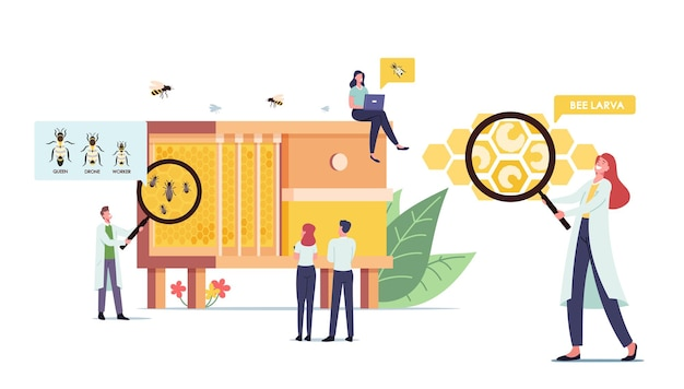 Drobne postacie naukowców i mężczyzn uczące się pszczół w ogromnym ulu z trzema rodzajami owadów królowa, dron i robotnik. pasieki, koncepcja biologii nauki. ilustracja wektorowa kreskówka ludzie