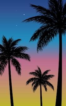 Drzewa kokosowe o zachodzie lub wschodzie słońca z kolorowym tłem nieba