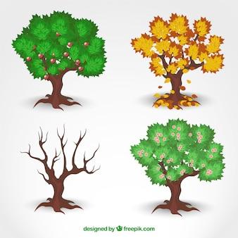 Drzewa sezonowe