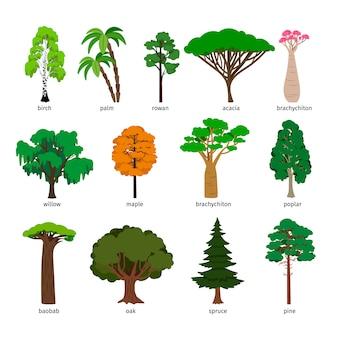 Drzewa wektorowe