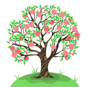 Drzewo brzoskwini na białym tle.