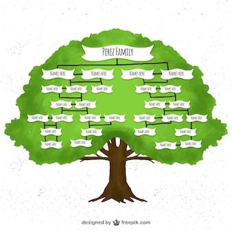 Drzewo genealogiczne akwarela