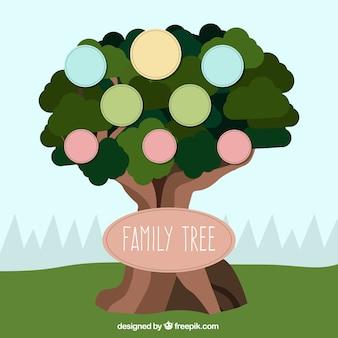 Drzewo genealogiczne szablon