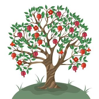 Drzewo granatu na białym tle