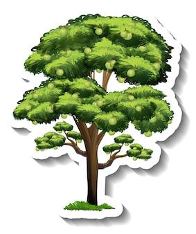 Drzewo guawy na przezroczystym tle
