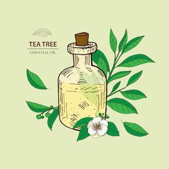 Drzewo herbaciane. ilustracja olejku eterycznego