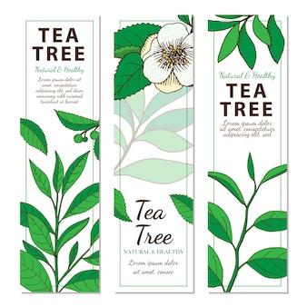 Drzewo herbaciane. zestaw wektor pionowe ręcznie rysowane banery z ziołami na białym tle
