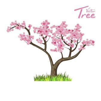 Drzewo japonii. sakura. przyroda i ekologia. naturalny obiekt do projektowania krajobrazu lub parku.