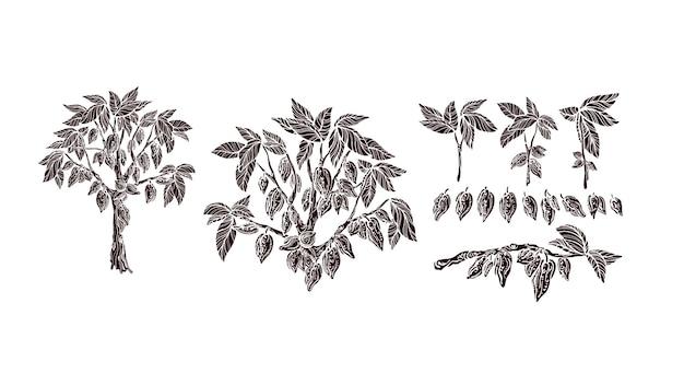Drzewo kakaowe zestaw gałęzi owoców wektor vintage kształt na białym tle organiczna czekolada