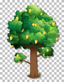 Drzewo mango na przezroczystym tle