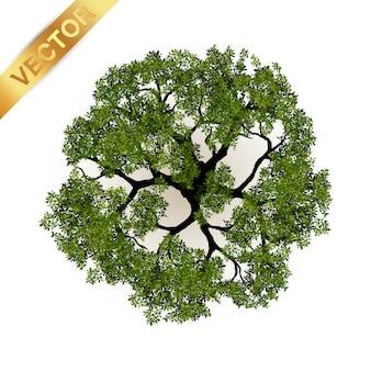 Drzewo odgórny widok dla krajobrazowej wektorowej ilustraci.