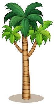 Drzewo palmowe