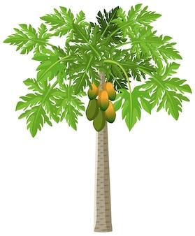 Drzewo papai na białym tle styl kreskówki na białym