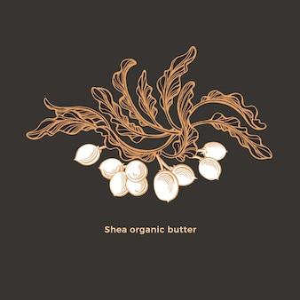 Drzewo shea. gałąź karite, liść szkicu, orzechy. ręcznie rysowane graficznej ilustracji