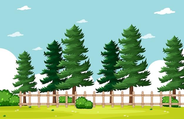Drzewo sosny w parku przyrody z jasną sceną błękitnego nieba