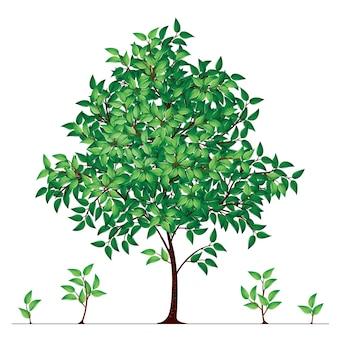 Drzewo w ilustracji kwitnienia