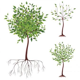Drzewo wektor