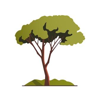 Drzewo z zieloną koroną