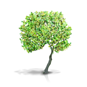 Drzewo z zielonymi liśćmi na białym tle