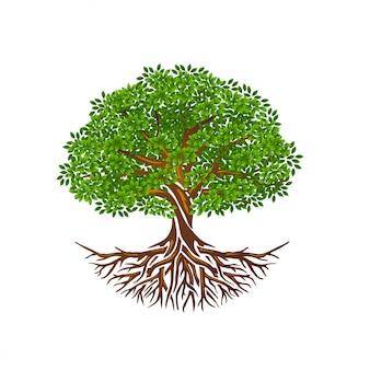 Drzewo życia lub drzewo i korzenie wektor izolowane, drzewo o okrągłym kształcie