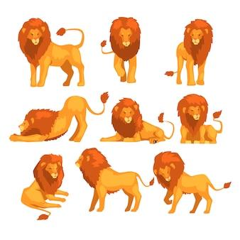 Dumny, potężny charakter lwa w różnych działaniach zestaw ilustracji kreskówek