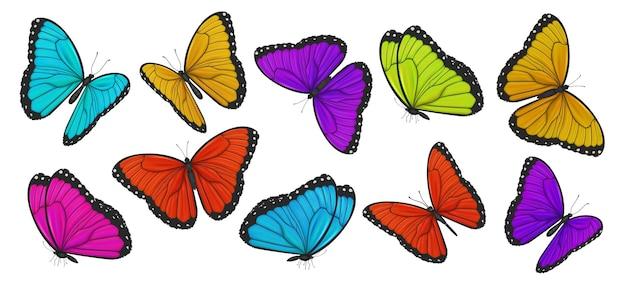 Duża kolekcja kolorowych motyli ilustracji wektorowych
