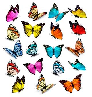 Duża kolekcja kolorowych motyli. wektor
