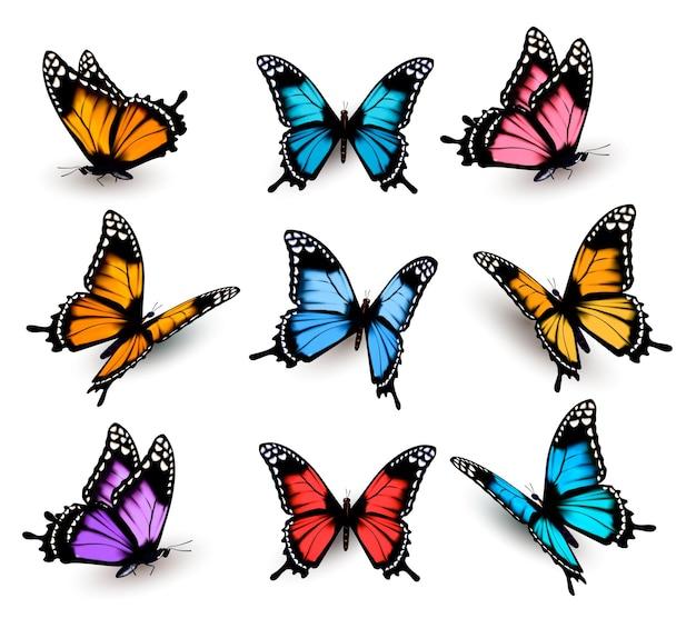 Duża kolekcja kolorowych motyli.
