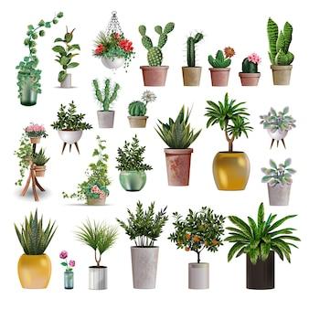 Duża kolekcja roślin.