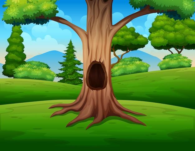 Duże puste drzewo pośrodku natury
