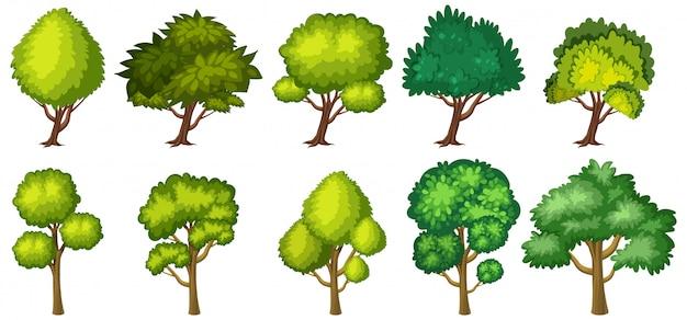 Duzi zieleni drzewa na białym tle