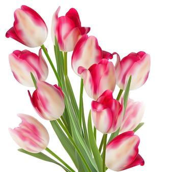 Duży bukiet tulipanów na białym tle.