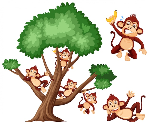 Duży drzewo i śliczne małpy na bielu