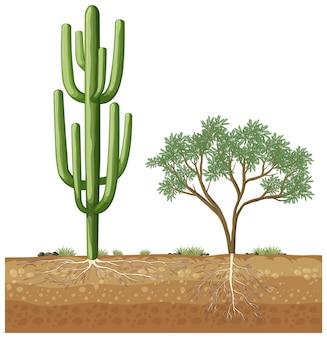 Duży kaktus rosnący obok drzewa