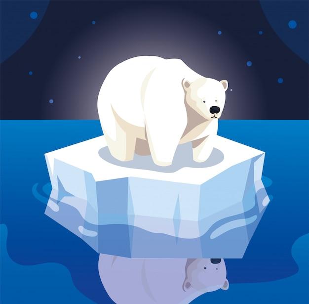 Duży niedźwiedź polarny na krze dryfuje